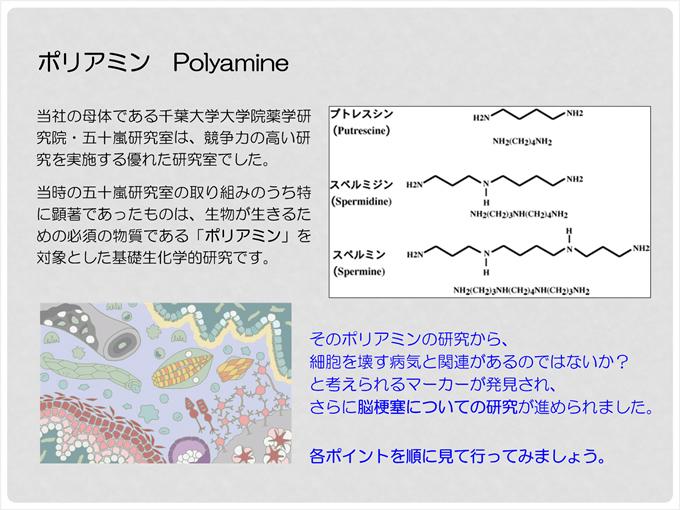 ポリアミン Polyamine 当社の母体である千葉大学大学院薬学研究院・五十嵐研究室は、競争力の高い研究を実施する優れた研究室でした。当時の五十嵐研究室の取り組みのうち特に顕著だったものは、生物が生きるための必須の物質である「ポリアミン」を対象とした基礎生化学研究です。そのポリアミンの研究から、細胞を壊す病気と関連があるのではないか?と考えられるマーカーが発見され、さらに脳梗塞についての研究が進められました。各ポイントを順に見て行ってみましょう。